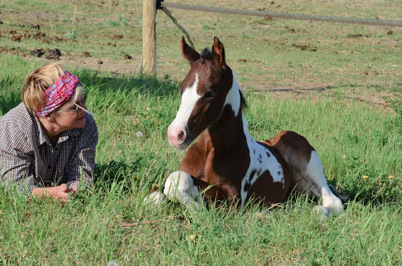 APHA FILLY SHARING PASTURE WITH OWNER