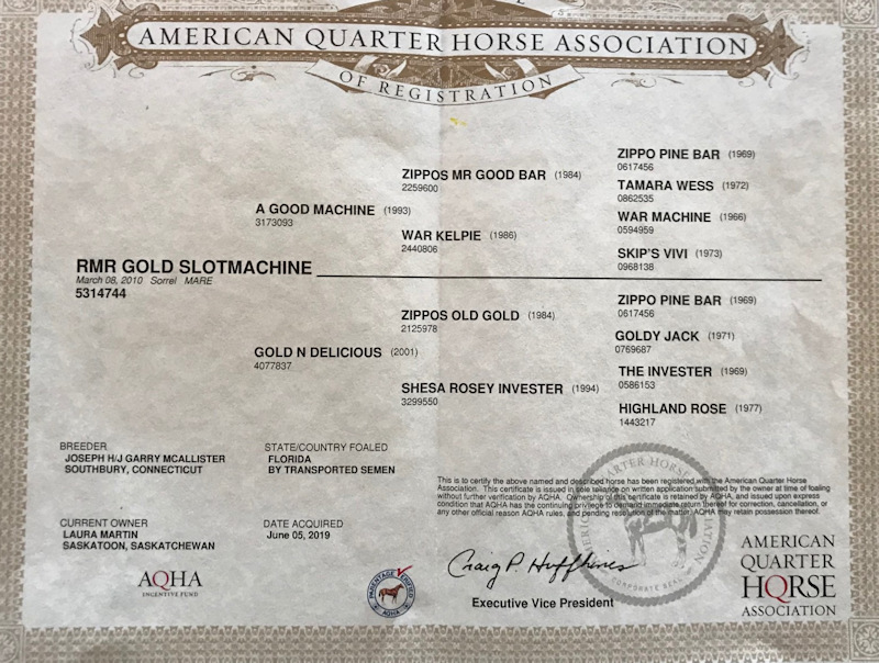 AQHA Mare sired by A Good Machine